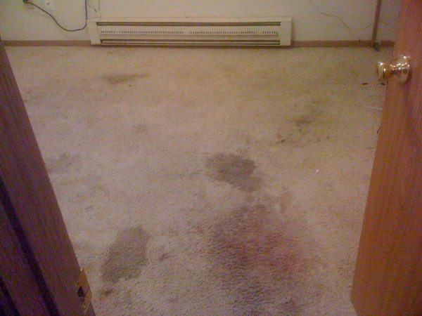 carpet cleaning portland red spots and stains before